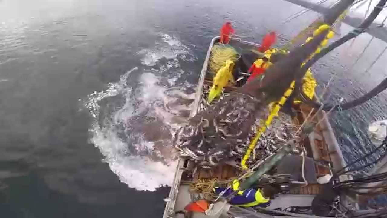 Southeast alaska purse seining f v lady liv 2014 youtube for Alaska out of state fishing license