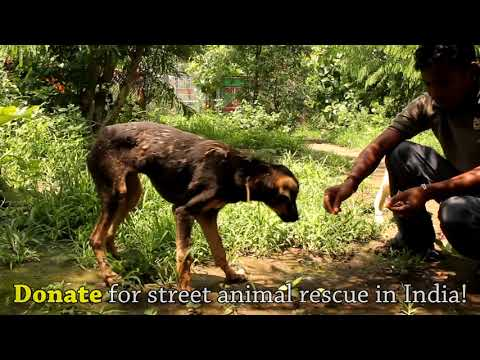 Covered in tar & unable to move, this amazing rescue saved this dog's life!