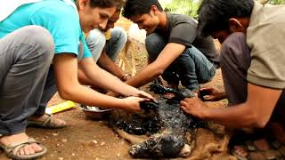rescue dog from road tar, cleaning a Dog fallen into a tar, Youtube viral animal rescue video
