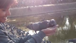 Sankey Tank Pigeons Namma Bengaluru, Best Place to Relax!