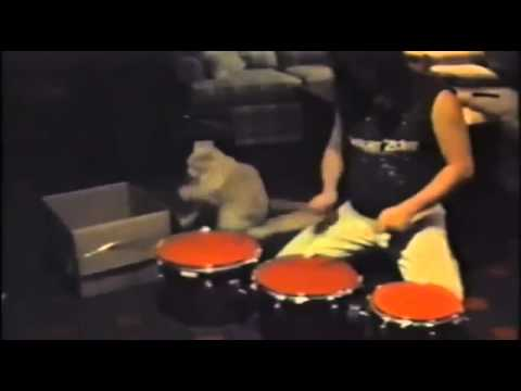 ドラムを演奏する猫!