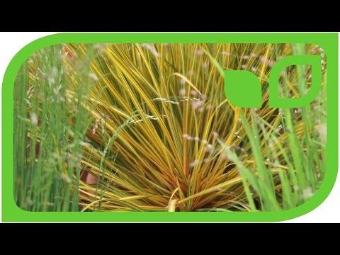 Chelsea Flower Show 2012 - Gräser Und Noch Mehr Gräser