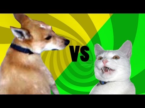 Cat vs Dog: Epic Tail Chaser