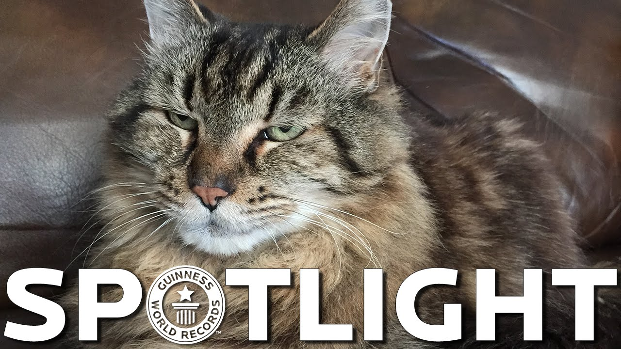 [Oldest Cat - Spotlight] Video
