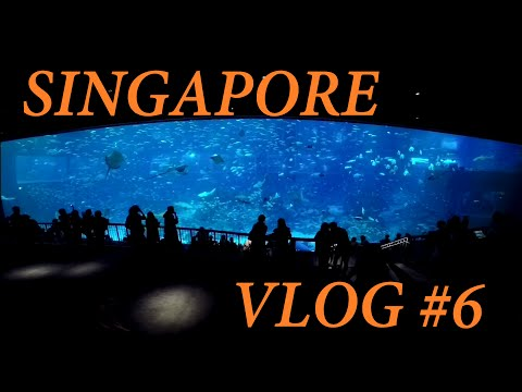 SG Vlog #6 - A Day Out Under the Sea | Singapore's S.E.A. Aquarium [April 2015]