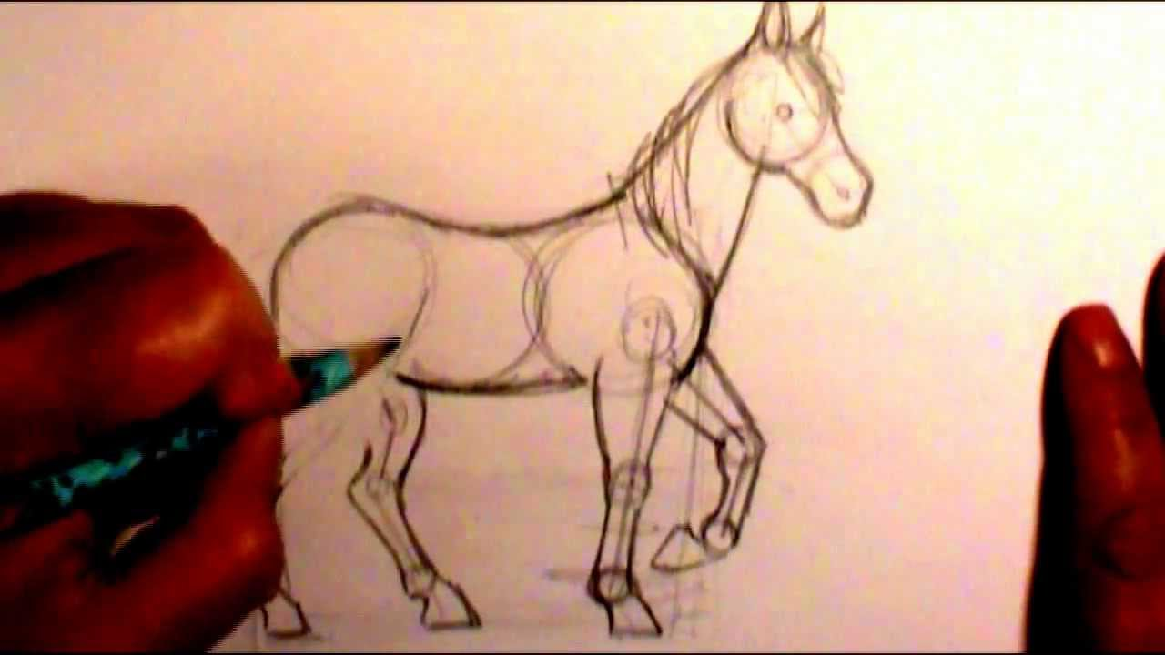 Horse Body Drawing How to Draw a Horse Body