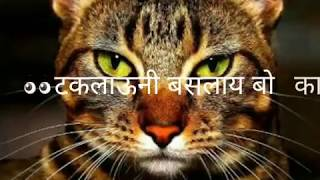 download lagu Funny Marathi Whatsapp Status 30 Sec.......tuzya Manjrila Dhoka..... gratis