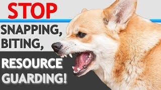 """How to STOP """"Food Aggression""""/ Resource Guarding in Dogs- WITHOUT FORCE"""