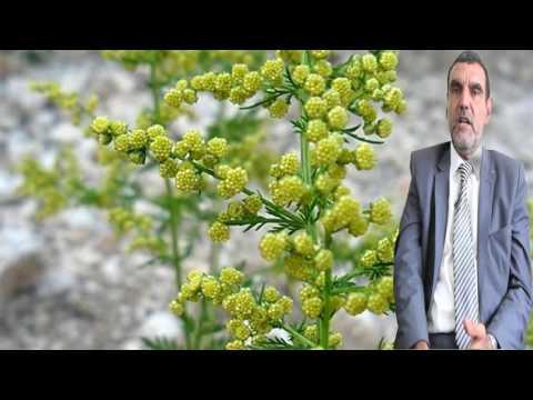 فوائد الشيح للأمراض وللعلاجات  Dr mohamed al fayed  محمد الفايد  fayed thumbnail