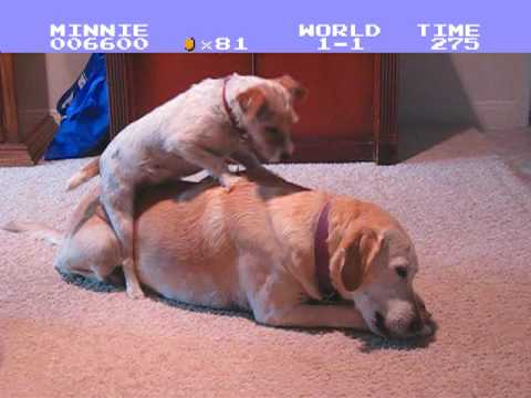 Super Mario Bros. Doggy Style Video