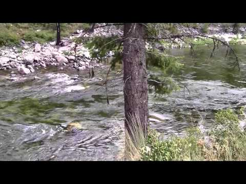 South Fork (Hettinger) Ranch 8-10-11 Video