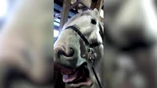 Funniest Pets  Animals of the Week Compilation May 2018  Hilarious Try Not to Laugh Animals Fail