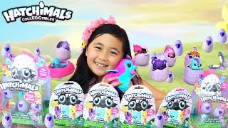 Hatchimals CollEGGtibles Hatching EggHunt Surprise Blind Bag Baby Animal Eggs