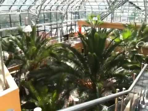 Palmiarnia W Zielonej Górze