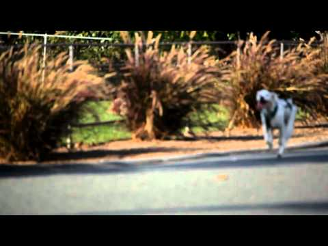 DOG PULLING SKATEBOARD at high speeds (1080HD)