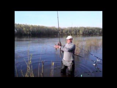 ловля чехони на фидер на десне видео