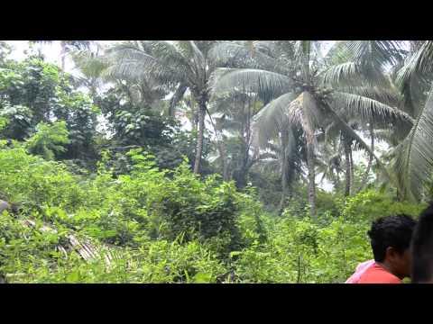 pano magbaba sa coconut tree (tutorial)