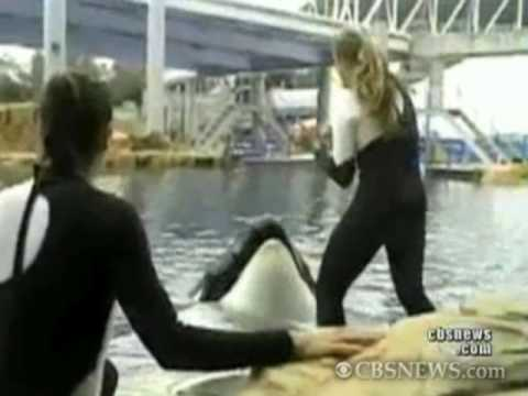 Killer Whale Attack 911 Call