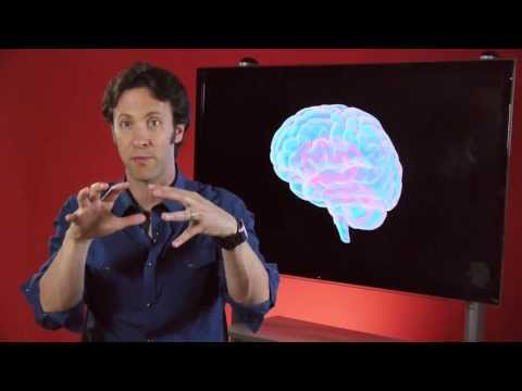 Your Brain is You: Learning and Memory (Part 5 of 6)