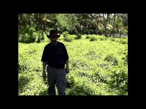 For The Love Of Children In Sri Lanka video
