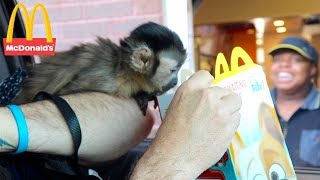 Baby Monkey Visits Mcdonalds Drive Thru! (MONKEYHAPPY MEAL)