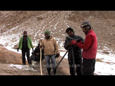 Men look for Snow leopard in the high altitude barren mountains of Ladakh