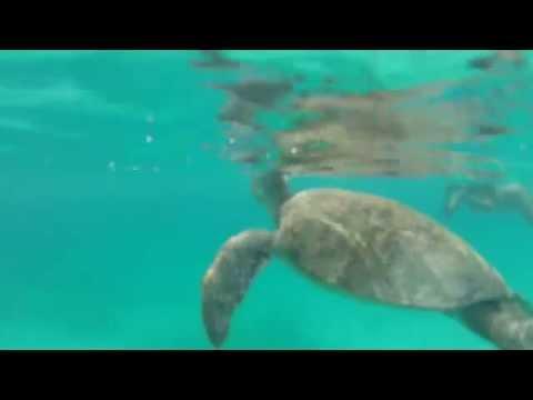 MARINE TURTLE Malaysia (HD)