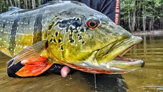 CRISTIAN VANEGAS (Cap. 3) River MATAVEN Peacock Bass Fishing in Colombia 2016 Tucunare o Pavon.