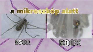A Mikroszkóp Alatt