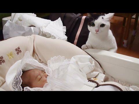 猫 赤ちゃんと初対面