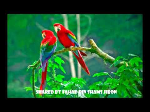 Tumi Je Amar Ke, Tumi Jano Na, Tumi Chara Kichu Valo Lage Na -  Sabina Yasmin & Endru Keshor video