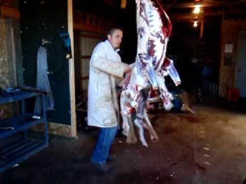 The 5 minute deer butchering