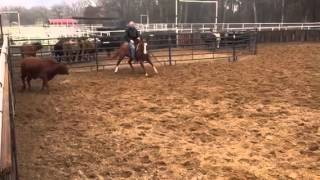 Swirl- Jared Lesh Cowhorses
