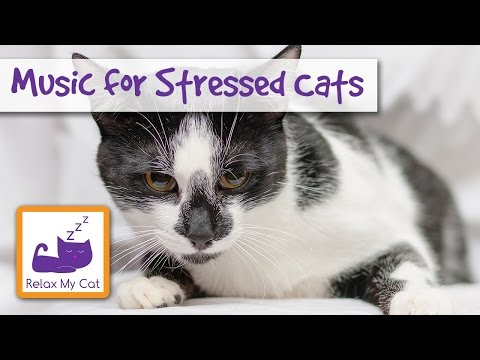 music for hot cats soothing music to calm down stressed cats cat music