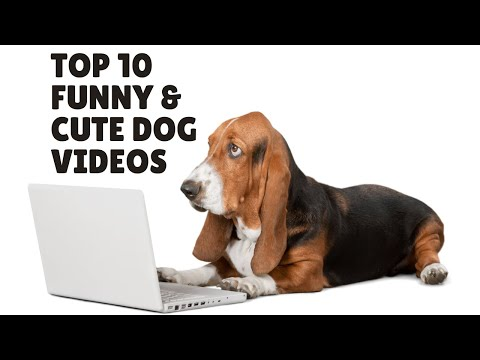 Top 10 Funny and Cute Dog Videos