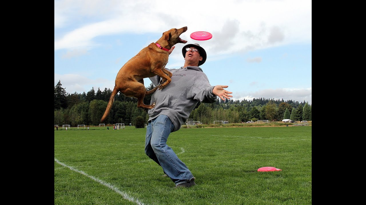 Teach Your Dog Tricks Videos