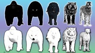 Black vs White wild animals finger family song for kids | nursery rhymes,Gorilla,lion,NASH TOON Tv