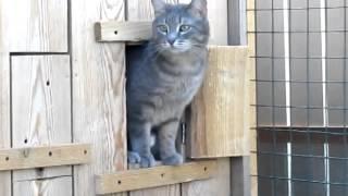 Uf, qué frío, dice el gatito ruso, mejor me quedo en casita