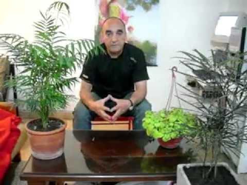 Plantas de interior para la salud el dinero y el amor - Plantas de interior nombres ...