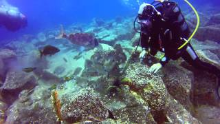 Tenerife Diving - Los Gigantes