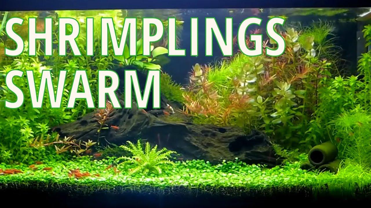 Nature Aquarium Aquascape Peter S 20g Breeder Shrimp Aquarium 3 Youtube