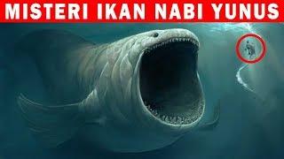 Misteri ikan Yang menelan Nabi Yunus Yang Dipercaya Masih Hidup!!