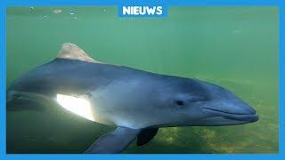 Dieren hebben last van herrie op de Noordzee
