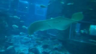 SEA Aquarium Underwater world-Sentosa-P2