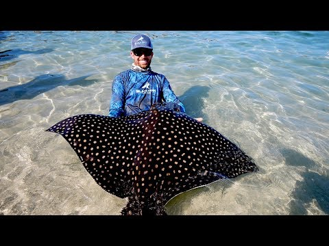 Food Chain Fishing Challenge 2 - Tiny Crabs to Giant Eagle Ray