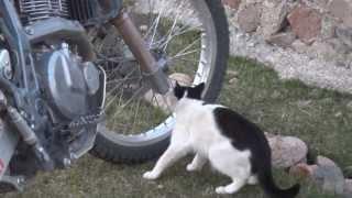 Download Lagu Cat mechanic. Gratis STAFABAND