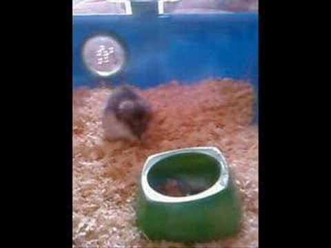 Sasha Hamster! xxx