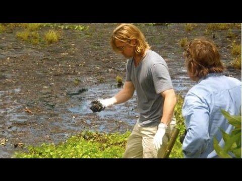 Brad Pitt Urged to Abandon Chevron Oil Spill Film