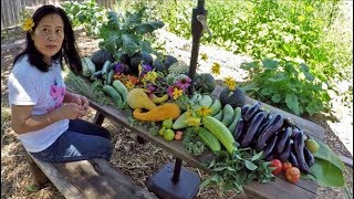 Filipina Gardening Harvest In America | Early Summer Abundance