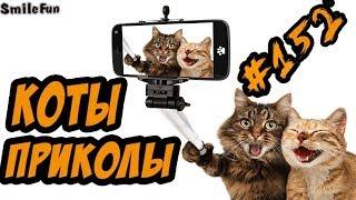 Приколы с котами - Озвучка котов и кошек - Смешные Коты 2018 - Funny Cats